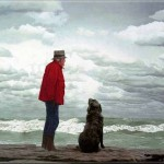 old man and dog on rock watching ocean storm